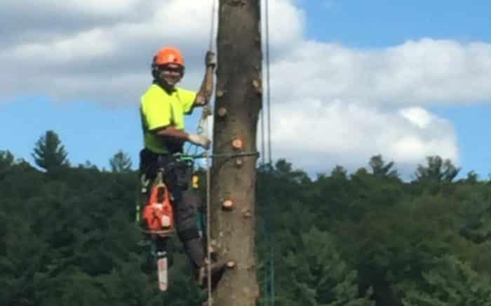 New Leaf Arboriculture Arborist and Tree Service - Travis close up in tree