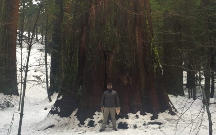 New Leaf Arboriculture Arborist and Tree Service - Travis standing by Redwood