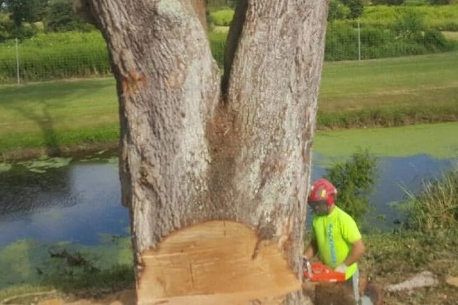 New Leaf Arboriculture Arborist and Tree Service - Travis trunk cut Lousiana