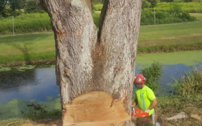 New Leaf Arboriculture Arborist and Tree Service - Travis trunk cut Lousiana
