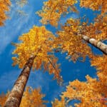 New Leaf Arboriculture Arborist and Tree Service - Featured Image for Happy Thanksgiving From Your Favorite Arborist
