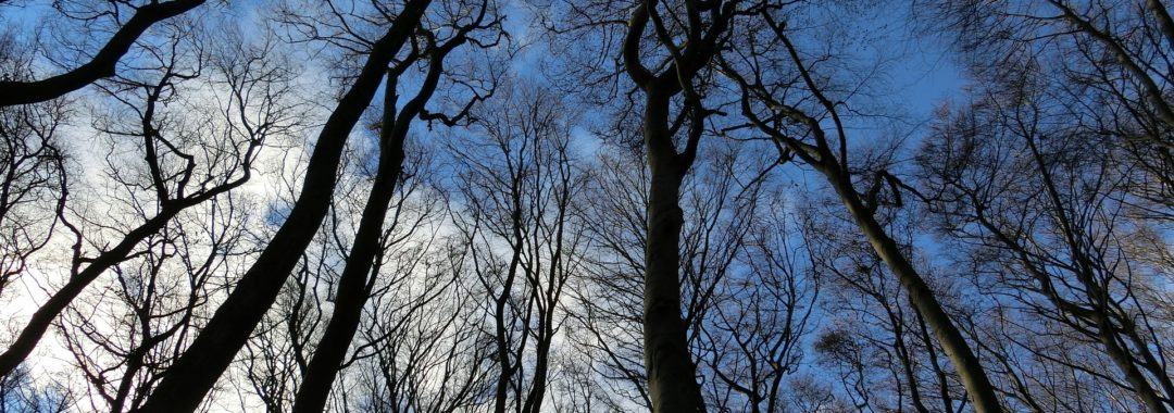 New Leaf Arboriculture Arborist and Tree Service - Featured Image for Winter Preparedness & Your Trees