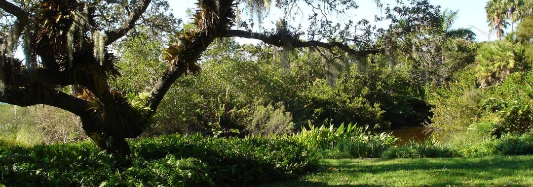 New Leaf Arboriculture Arborist and Tree Service - Featured Image for Let New Leaf Arborists Remove Your Unhealthy Trees