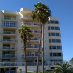 Gulf Shore Dr, Destin, Florida - Washingtonia Palm 03