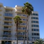 Gulf Shore Dr, Destin, Florida - Washingtonia Palm 04