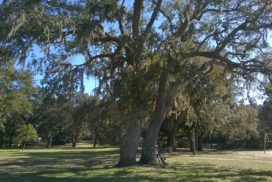 Southern Live Oak-Fort Walton Beach Florida-05