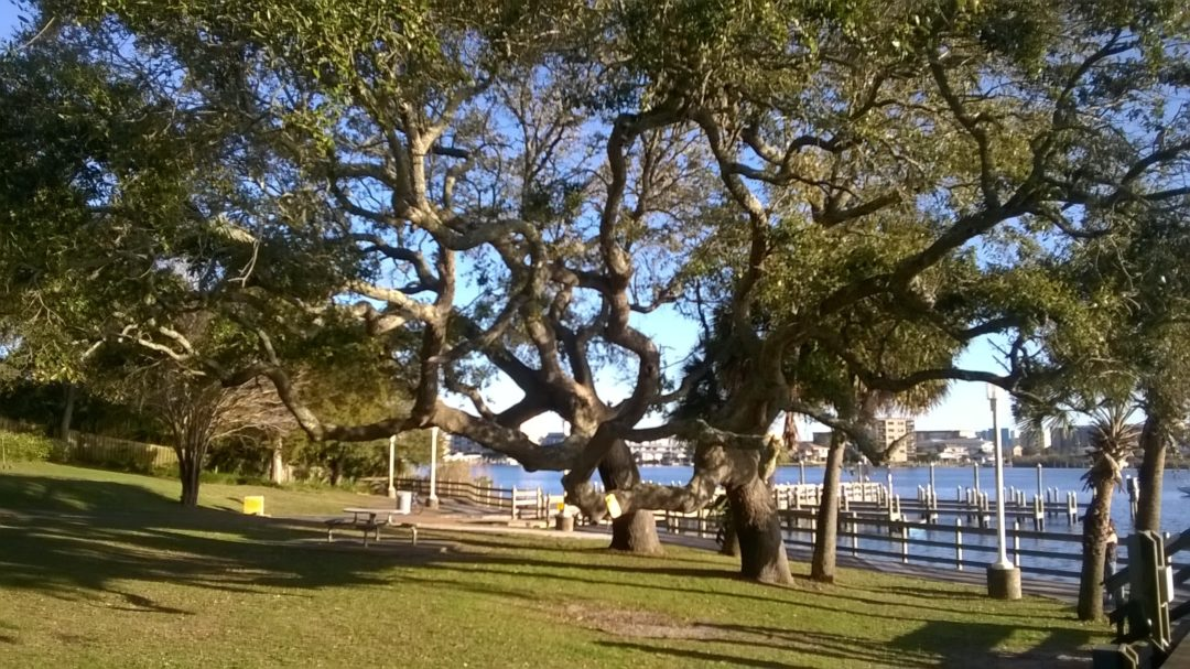 Southern Live Oak-Fort Walton Beach Florida-07