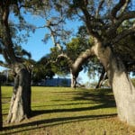 Our Tree Appraisal Service Determines Your Tree Value Featured Image