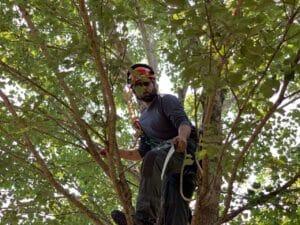 New Leaf Arboriculture - Navarre - 2019 - Certified Arborist