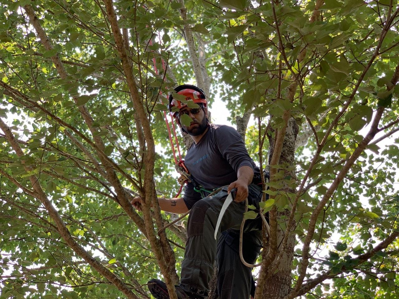 Certified Arborist Blog