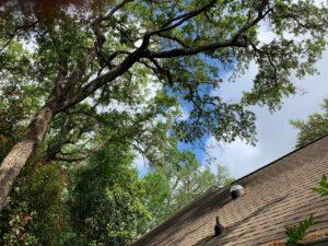 New Leaf Arboriculture - Seasonal Tree Care Services 01